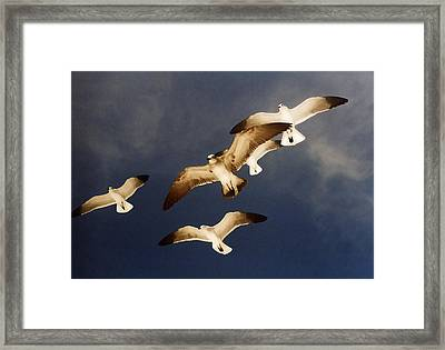 Soar Framed Print by Ginger Howland