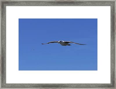 Soar Like A Seagull Framed Print