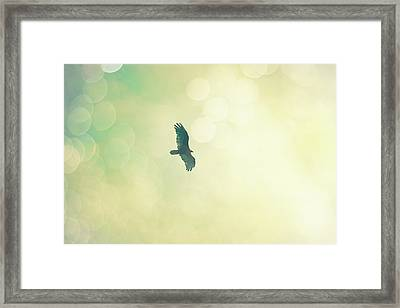 Framed Print featuring the photograph Soar by Melanie Alexandra Price