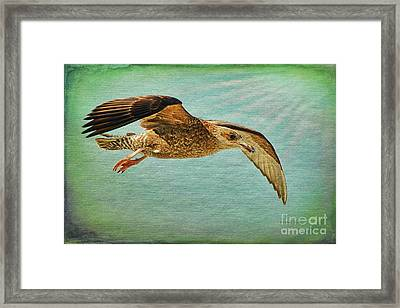Soar With Me Framed Print