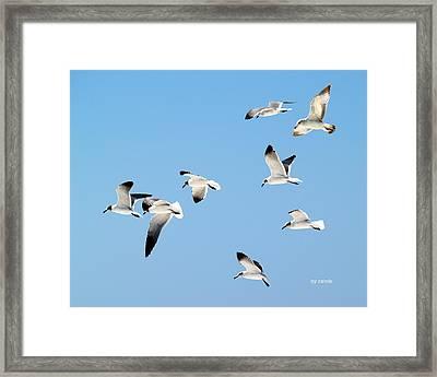 Soaring Framed Print by Athala Carole Bruckner