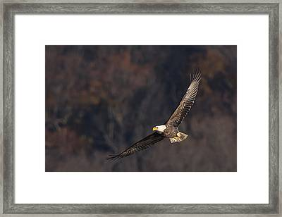 Framed Print featuring the photograph Soaring by Cindy Lark Hartman