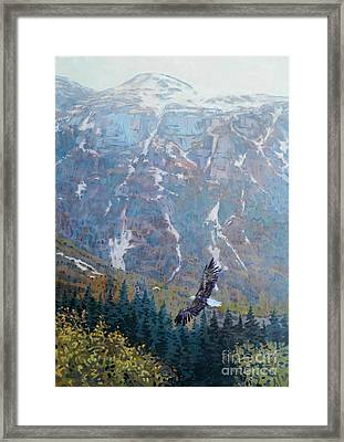 Soaring Eagle Framed Print by Donald Maier