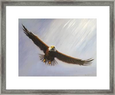 Soaring Eagle Framed Print by Greg Neal