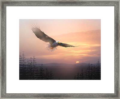 Soaring Free Framed Print