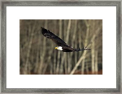 Soaring Glory Framed Print