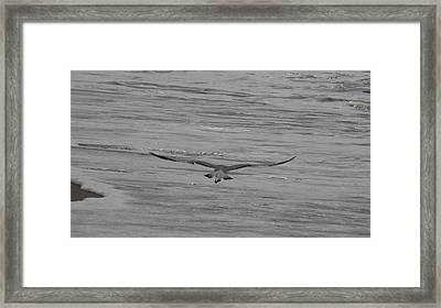 Framed Print featuring the photograph Soaring Gull by  Newwwman