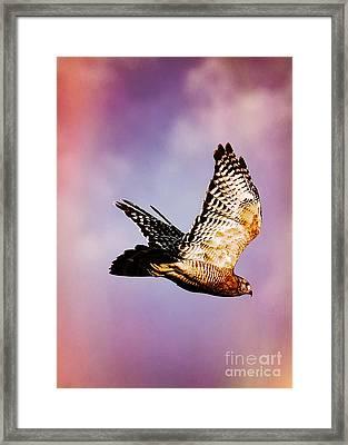 Soaring Hawk In Colorful Sky Framed Print