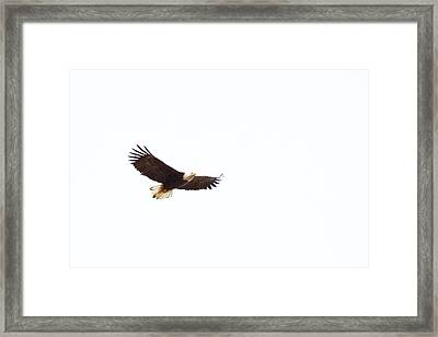 Framed Print featuring the photograph Soaring High 0881 by Michael Peychich