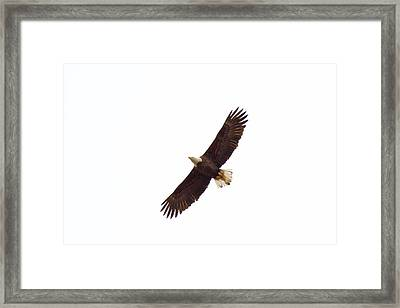 Framed Print featuring the photograph Soaring High 0885 by Michael Peychich
