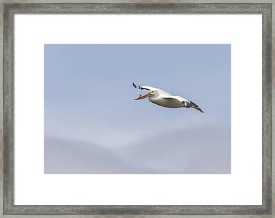 Soaring In The Skies Framed Print by Thomas Young