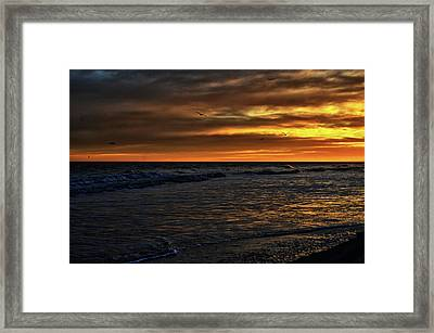 Soaring In The Sunset Framed Print by Kelly Reber