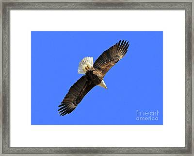 Soaring Into The Blue  Framed Print