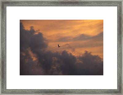 Framed Print featuring the photograph Soaring Into The Sunset by Richard Bryce and Family
