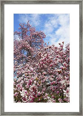 Soaring Magnolia Framed Print