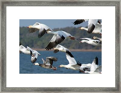 Soaring On The Wing Framed Print