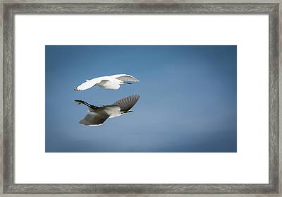 Soaring Over Still Waters Framed Print