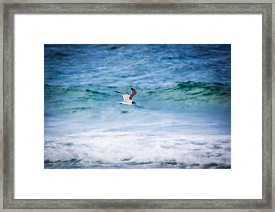 Soaring Over The Ocean Framed Print by Shelby Young