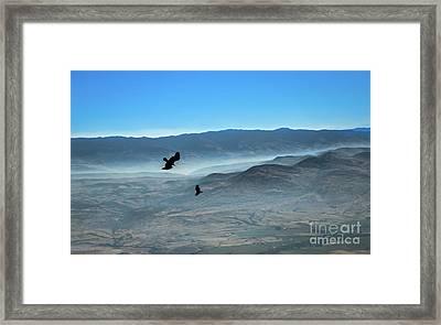 Soaring Ravens Framed Print by Robert Bales