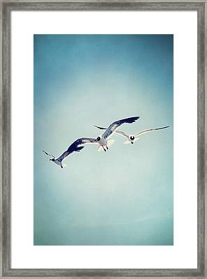 Framed Print featuring the photograph Soaring Seagulls by Trish Mistric