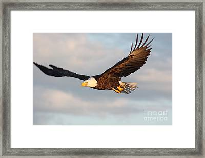Soaring With Purpose Framed Print