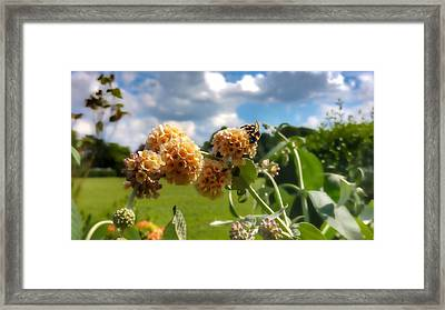 Framed Print featuring the photograph Sobaso by Isabella F Abbie Shores FRSA