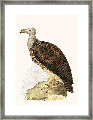 Sociable Vulture Framed Print