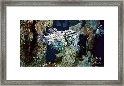 Socializing Fish Framed Print