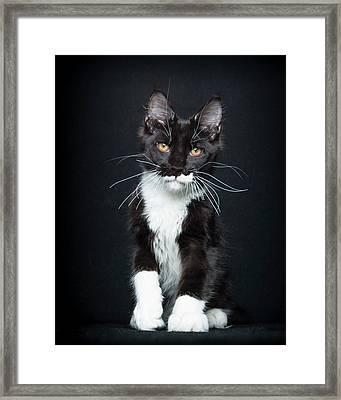 Framed Print featuring the photograph Socks by Robert Sijka