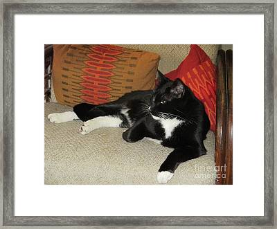 Socks The Cat King Framed Print by Fred Jinkins
