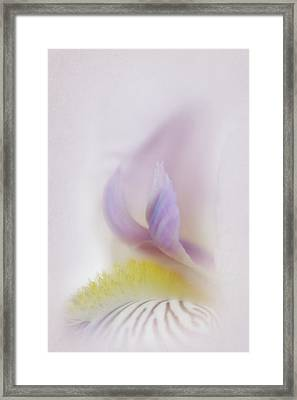 Framed Print featuring the photograph Soft And Delicate Iris by David and Carol Kelly