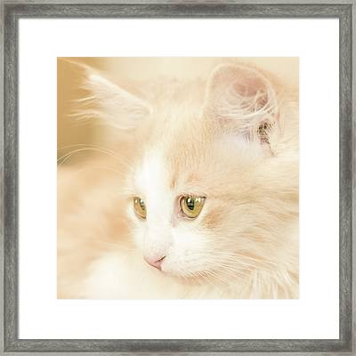 Soft And Dreamy Framed Print
