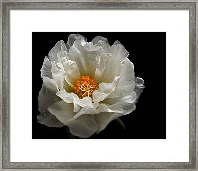 Framed Print featuring the photograph Soft And Pure by Judy Vincent