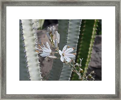 Pretty And Prickly - Beautiful White Flower Framed Print