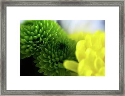 Soft As A Breeze Framed Print