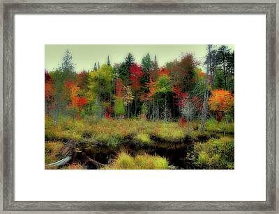 Framed Print featuring the photograph Soft Autumn Color by David Patterson