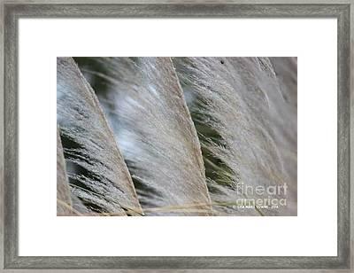 Soft Breeze Framed Print