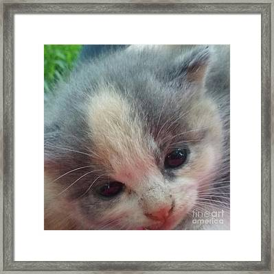 Soft Calico Kitten Framed Print by Seaux-N-Seau Soileau