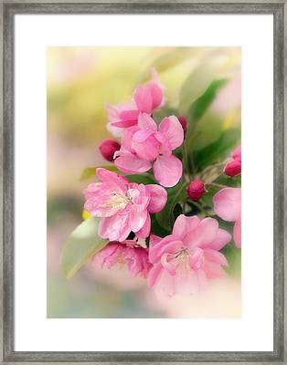 Soft Apple Blossom Framed Print by Jessica Jenney