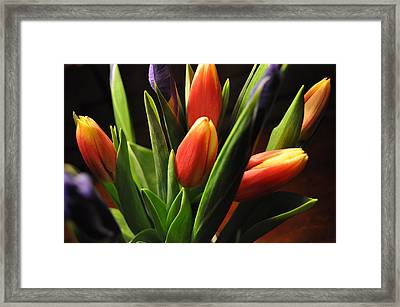Soft Fireworks Framed Print by Luke Moore