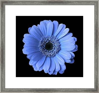 Soft Flower Joy Framed Print