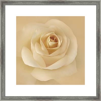 Soft Golden Rose Flower Framed Print by Jennie Marie Schell