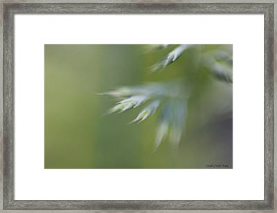Soft Green Framed Print