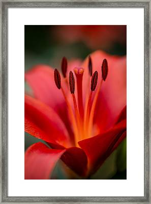 Soft Intimate View Framed Print by Dale Kincaid