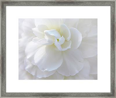 Soft Ivory Begonia Flower Framed Print by Jennie Marie Schell