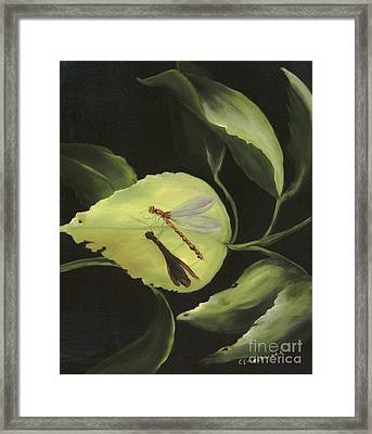 Soft Landing Framed Print by Carol Sweetwood