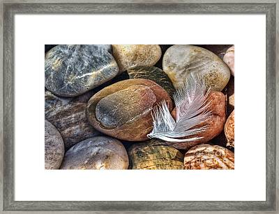 Soft Landing Framed Print by John Edwards