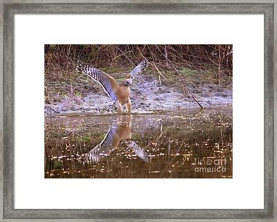 Soft Landing On The Pond Framed Print