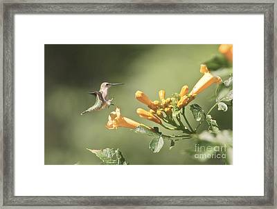 Soft Landing Framed Print by Robert Pearson