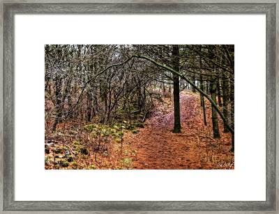 Soft Light In The Woods Framed Print